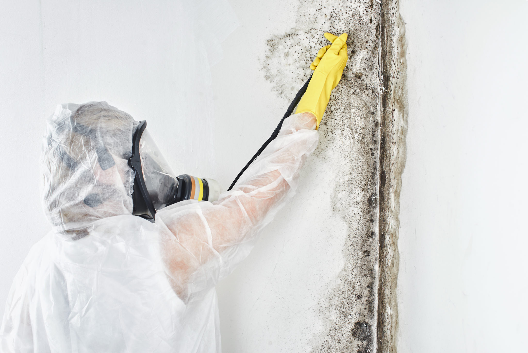 Mold Removal Bethesda